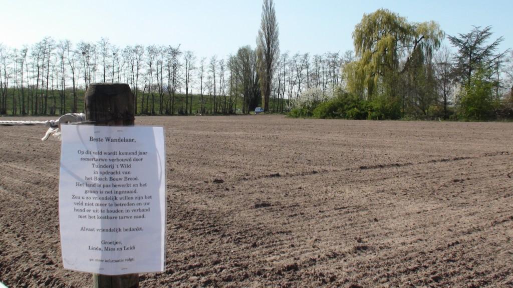 Lavett (biologisch tarwe) ingezaaid op 13 april